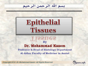 Histology of The Epithelial Tissues