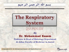Histology of The Respiratory   System